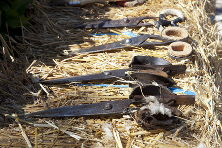 shearer: Shearing scissors with cork protection for fingers over straw bale