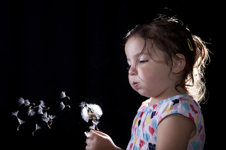 Toddler playing and blowing on a dandelion, isolated over black background. Three years old photo