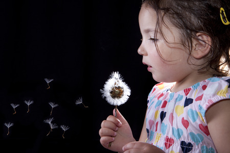 three years old: Toddler playing and blowing on a dandelion, isolated over black background. Three years old Stock Photo