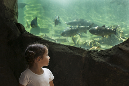 three years old: Three years old toddler girl visiting a river aquarium full of fish
