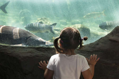 aquarium visit: Three years old toddler girl visiting a river aquarium full of fish