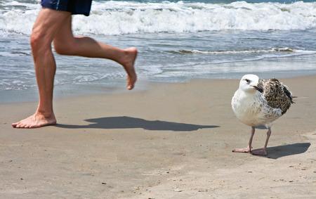 coney: Man Running On Beach close to a big seagull on Coney Island, USA Stock Photo