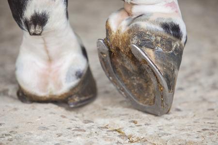 馬小屋の外蹄足を馬の詳細ビュー