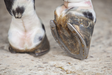 detailed view: Detailed view of horse foot hoof outside stables Stock Photo