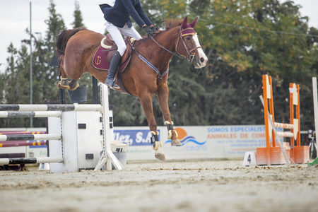 overtake: BADAJOZ, SPAIN - Nov 22: Horse landing after overtake the obstacle at Poni Club Local Cup Qualifying competition on November 22, 2015 in Spain Editorial