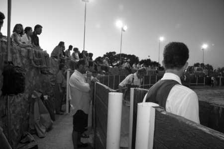 heifers: OLIVENZA, SPAIN, JULY 31: the toreros wait for performs at night training bullfight for heifers or tentadero. Black and white shot
