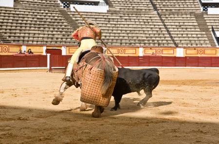 badajoz: BADAJOZ, SPAIN, MAY 11: Training bullfight behind closed doors, on May 11, 2010 in Badajoz, Spain.  The lancer wounding the bull Editorial