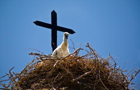extremadura: Chick stork and nest over church tower with blue sky, Badajoz, Extremadura, Spain