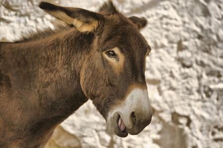 grosse fesse: �ne Animal Farm couleur brune debout pr�s du mur de l'ancienne Badajoz, Espagne ville