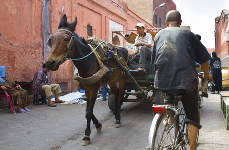 moroccan culture: MARRAKESH, MOROCCO - OCTOBER 18: View of a horse carriage by the narrows streets of the  Marrakechs Medina on October 18th, 2011 in Marrakesh, Morocco