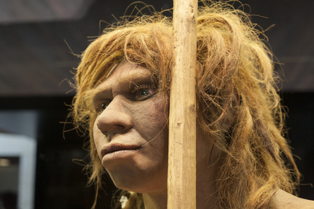 archeological: Madrid, Spain - July 10, 2016: Life-sized sculpture of Neanderthal female at National Archeological  Museum of Madrid