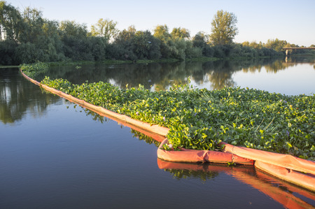 Floating barrier for control of invasive plant water hyacinth. Highly problematic invasive species at Guadiana River, Badajoz, Spain Stock Photo