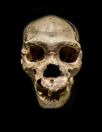 Miguelon, nickname for the most complete skull of an Homo heidelbergensis ever found. Found at Atapuerta Sima de los Huesos, Burgos, Spain Stock Photo