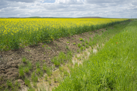 Drain canal beside rapeseed field in bloom at La Serena, Extremadura, Spain Stock Photo