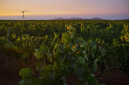 Poste de estación meteorológica que registra datos meteorológicos en un viñedo de la Región de Tierra de Barros. Extremadura, España. concepto de tecnología agrícola inteligente Foto de archivo