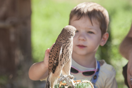 Child boy with wounded Lesser kestrel at bird rescue center. Environmental education for children concept