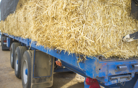 Heavy trailer truck loaded with straw bales. Closeup