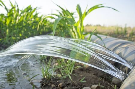 Flexible irrigation tubing system for row-cropped, leveled-to-grade farmland. Extremadura, Spain Stock Photo