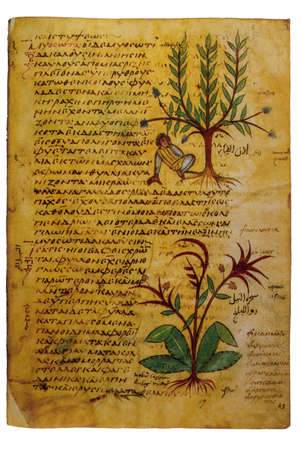 9th Century uncial writing manuscript from Dioscorides De Materia Medica. Biblioteque Nationale, Paris. N.2179 Sheet 15 新聞圖片