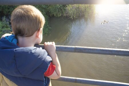 Little boy standing on bridge observing a wild duck family. Discovering nature for children concept Stok Fotoğraf