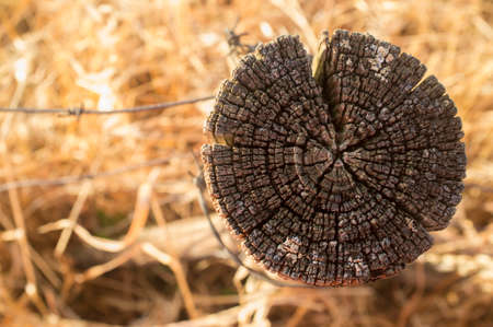 Top of an old and weathered agricultural fence post over dry pasture background. Closeup