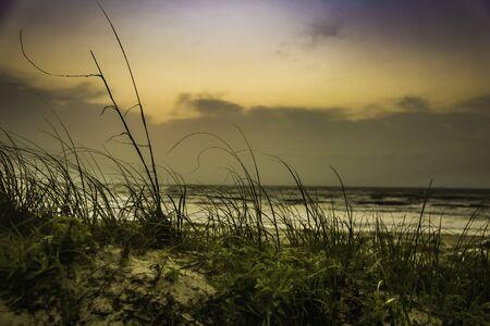 Gulf Coast dune at sunrise