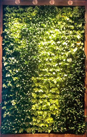 Large wooden, shelved, hanging box containing rows of living plants made to look like artwork