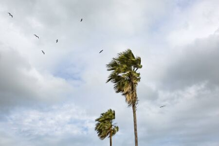 two palms trees stand against background of sky and flying seagulls