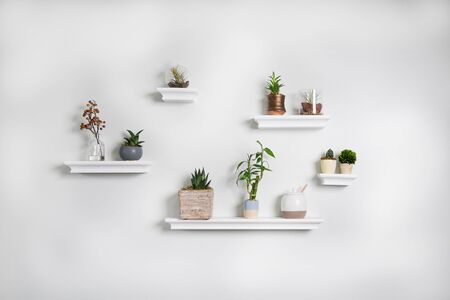 Assortment of potted plants and succulents on white shelves against white wall