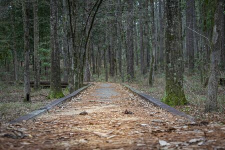 Wooden path access in forest