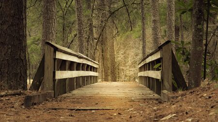 Close up of a wooden bridge along the trail in forest
