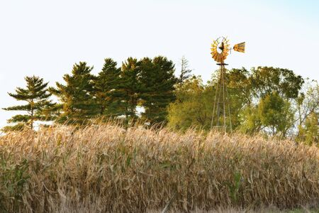 Corn stalks in foreground with ood windmill and trees in background during fall