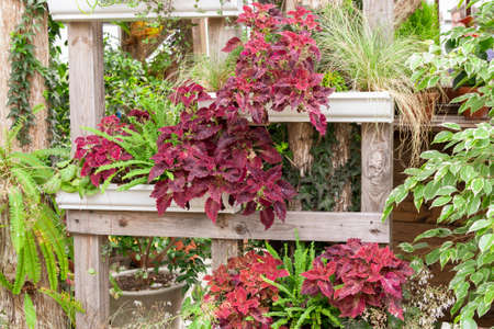 A display of mixed plants featuring red coleus and ferns planted on wooden shelves.