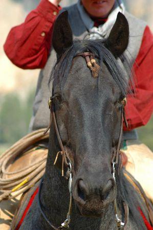 paardenhoofd: Paard met hoofd Rider in de achtergrond