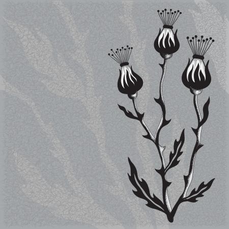 Thistle Flower Stock Vector - 17690749