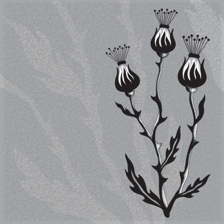thistle:  Thistle Flower