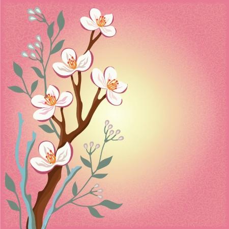 꽃이 만발한: 벚꽃의 꽃 지점과 분홍색 배경에 버드 나무