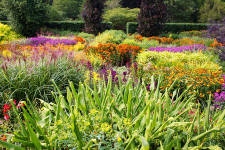 flor morada: Colorido jard�n de flores