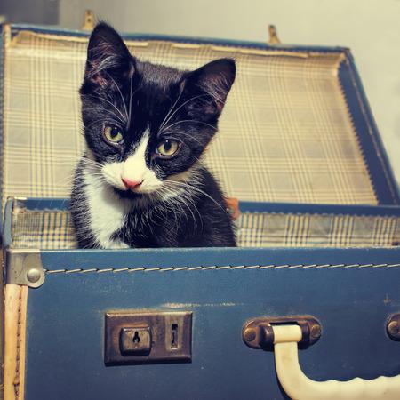 Kitten In Vintage Suitcase. Retro style