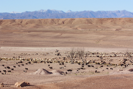 Desert Shepherd with Sheep. Mountain Horizon