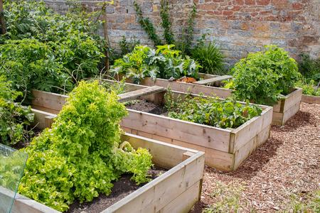 Raised Bed Vegetable & Flower Garden Stock Photo