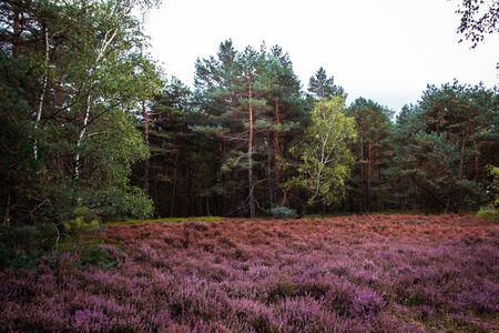 Impressions from the Fischbeker Heide near Hamburg