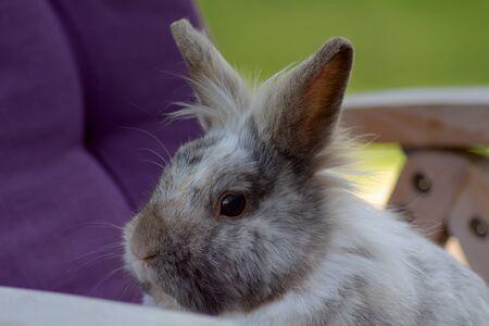 Dwarf Rabbit sitting on a Garden Chair