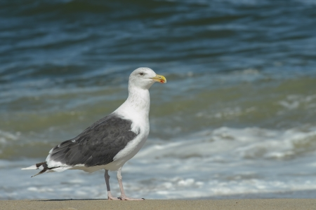 seagull standing on the beach Banque d'images