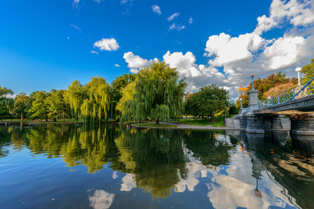 weeping willow: Weeping willow trees and a pond in the Boston Public Garden