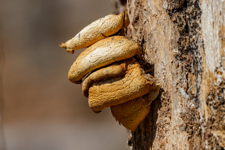 fungal: Yellow fungus parasite on a tree close-up Stock Photo