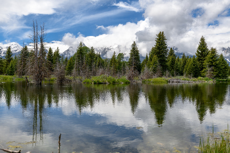 Schwabacher landing in early morning with its reflection. Grand Teton national park, WY 版權商用圖片
