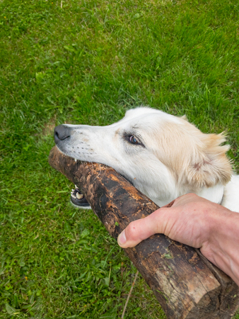 Dog and owner fighting for control of the log