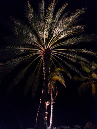 A palm tree in the U.S. Virgin islands is highlighted during the night Reklamní fotografie - 101334783