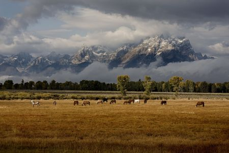 Herd of horses in front of Tetons with dramatic lighting